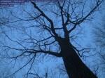 witnesstree